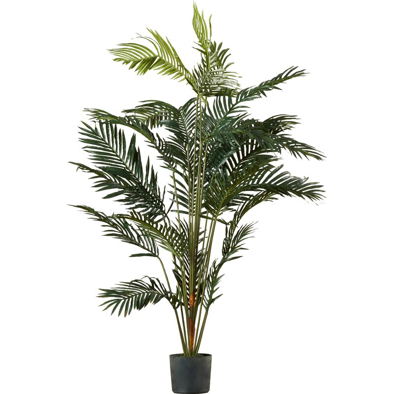 Paradise Palm Tree Floor Plant In Pot Amp Reviews Birch Lane