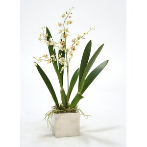 Oncidium Orchid in Square Nickle Planter (Set of 2)