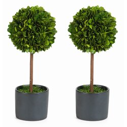 Zodax Single Ball Preserved Boxwood Topiary in Pot & Reviews | Wayfair