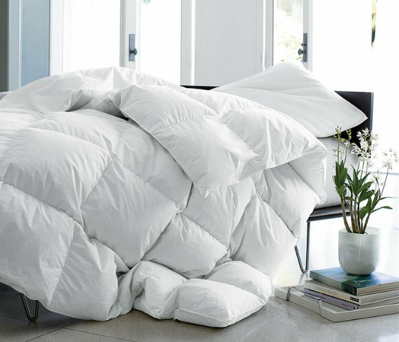 Arsuite Winter Goose Down Comforter Wayfair