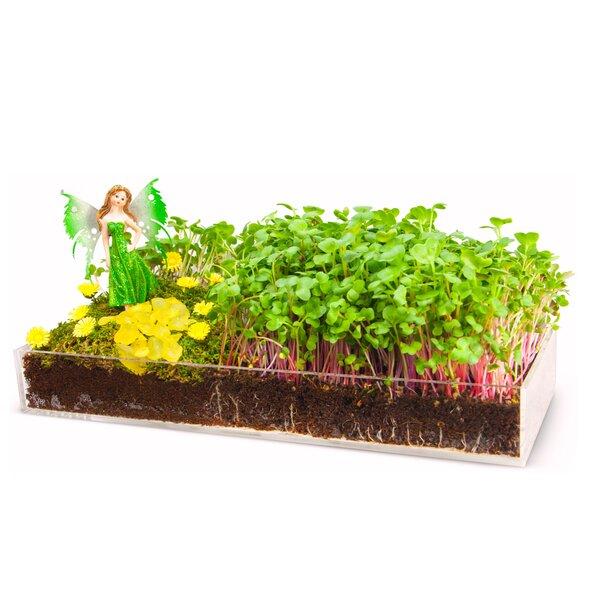 Fairy Garden Kits   Wayfair