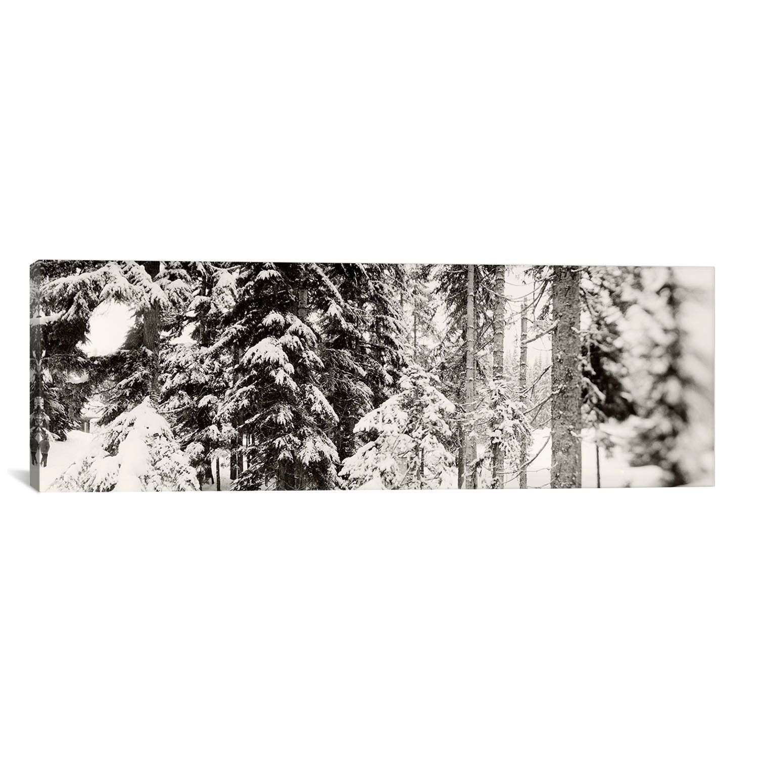 Icanvas Panoramic Snow Covered Evergreen Trees At Stevens