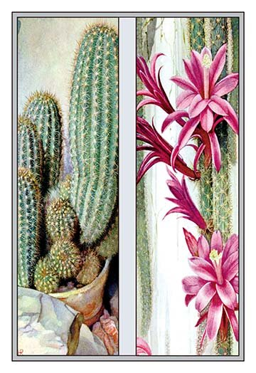 Buyenlarge Cactus And Flower2 Piece Graphic Art Set Wayfair