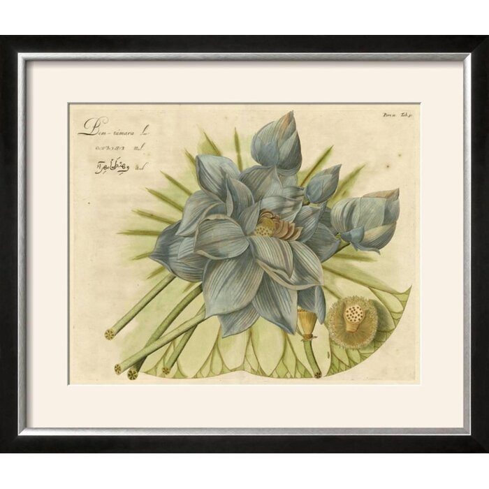 Ophelia Co Blue Lotus Flower Ii Framed Graphic Art Print