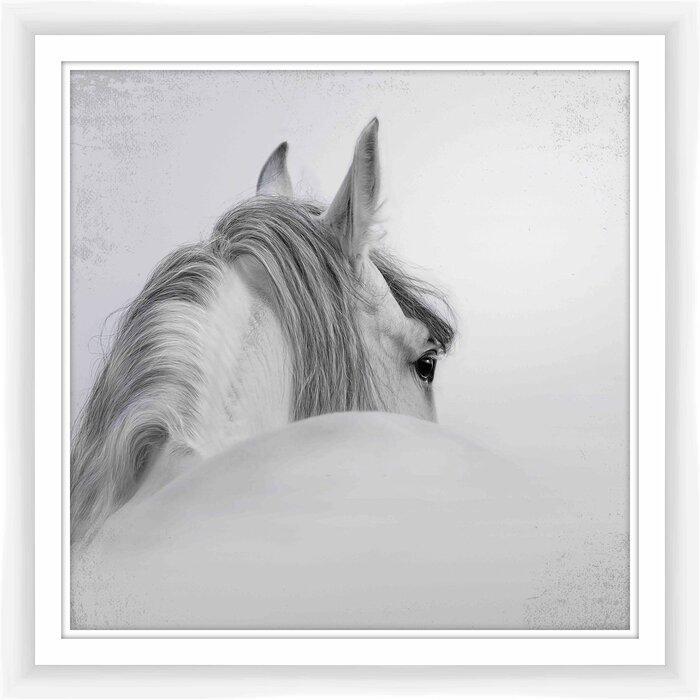 PTM White Horse Framed Photographic Print & Reviews | Wayfair.ca