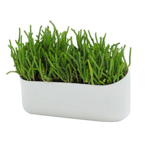 plastic wall planter