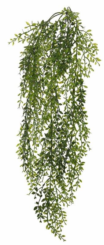 Lemon Beauty Leaf Vine Foliage Plant