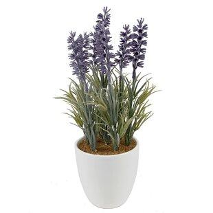 Lavender Desktop Floral Arrangement in Pot