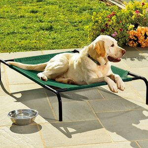 Faith Large Weather-Resistant Raised Mesh Pet Bed