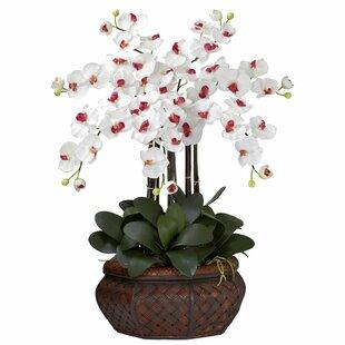 Large Phalaenopsis Silk Flower Arrangement In White