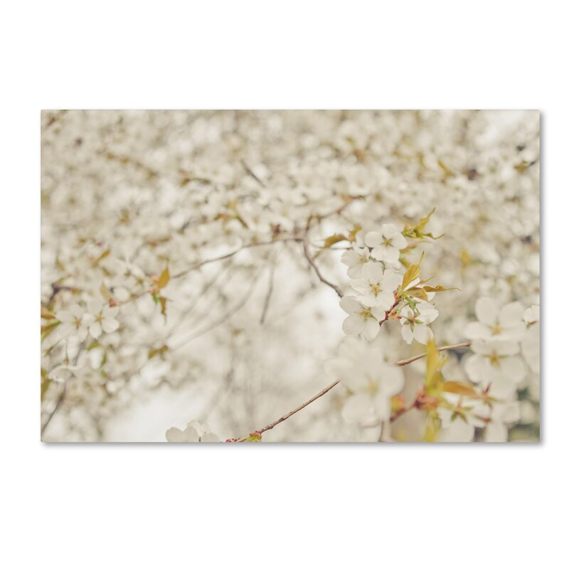 Trademark Art White Cherry Blossoms By Ariane Moshayedi Photographic Print On Wrapped Canvas Wayfair