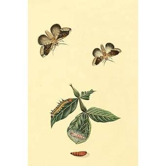 Buyenlarge Surinam Butterflies Moths And Caterpillars By Jan Sepp Graphic Art Print Wayfair