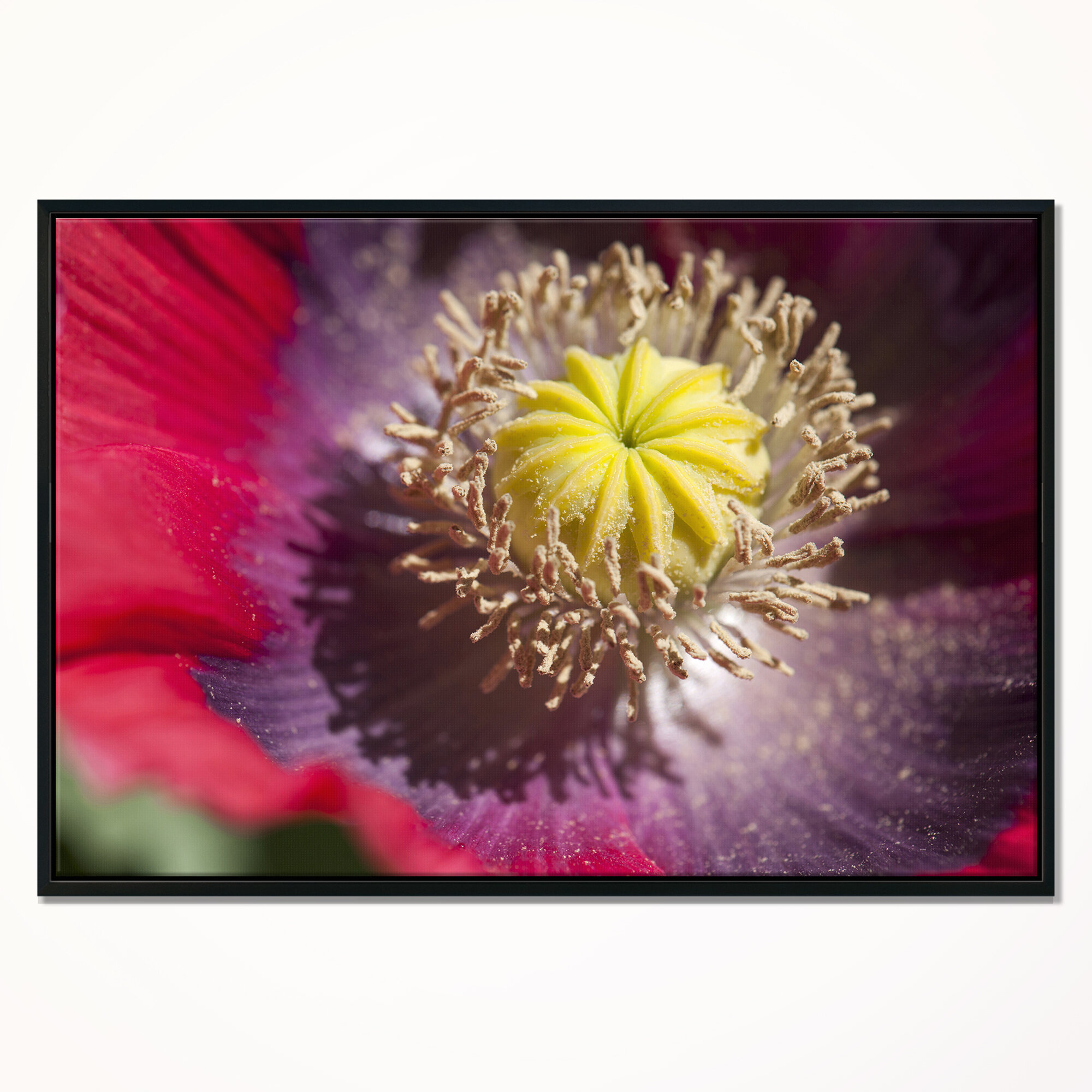 East urban home colorful opium poppy flower photo framed east urban home colorful opium poppy flower photo framed photographic print on wrapped canvas wayfair mightylinksfo