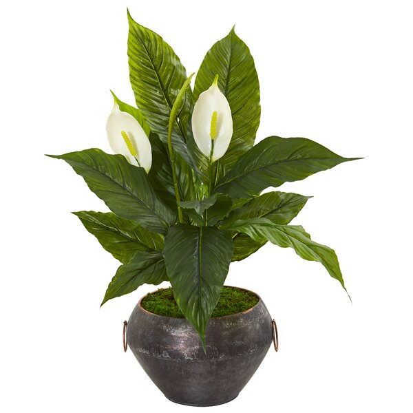 Bay Isle Home Artificial Spathiphyllum Plant In Planter Wayfair
