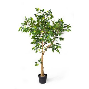 Wayfair Artificial Ficus Faux Trees You Ll Love In 2021