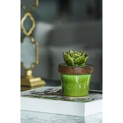 Succulent Bungalow Rose Decorative Objects You Ll Love In 2021 Wayfair