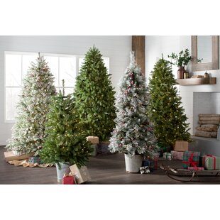 Extra Full Christmas Trees Youll Love Wayfair