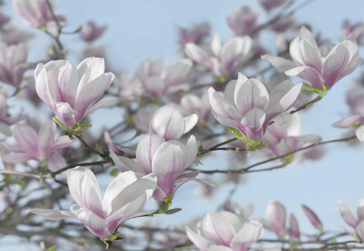 brewster home fashions komar magnolia wall mural reviews wayfair default name