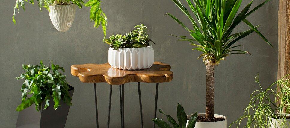 Modern Outdoor Planters | AllModern