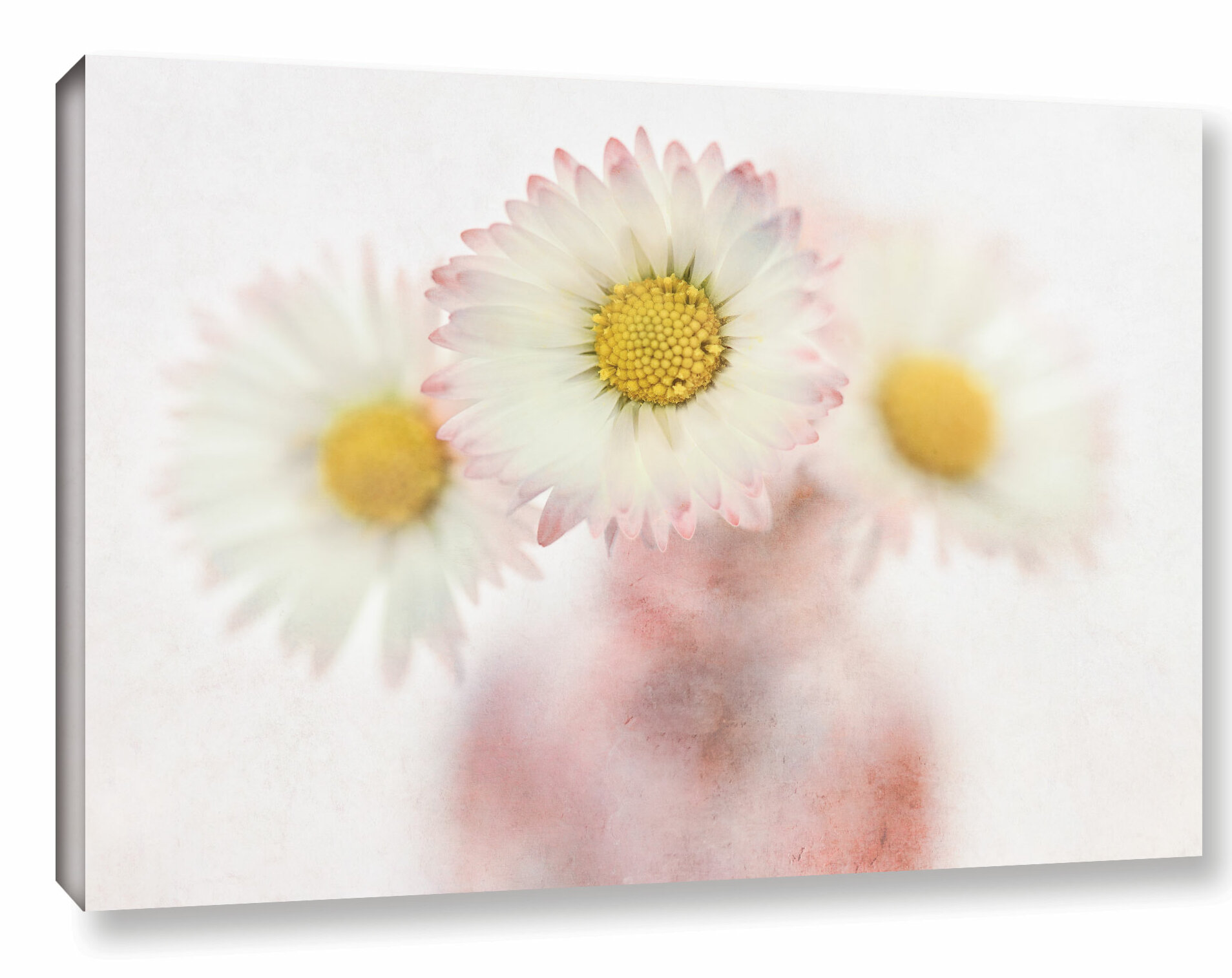 Latitude Run Daisies Light Airy Photographic Print On Wrapped Canvas Wayfair