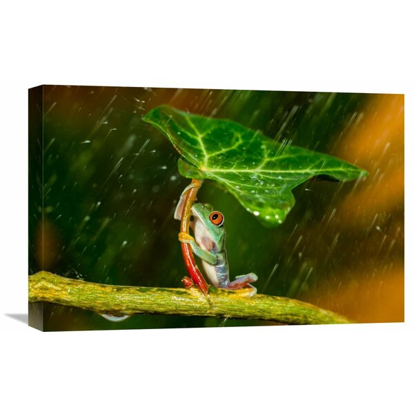 Global Gallery Ohh Noo Its Raining By Kutub Uddin Graphic Art On Wrapped Canvas Wayfair
