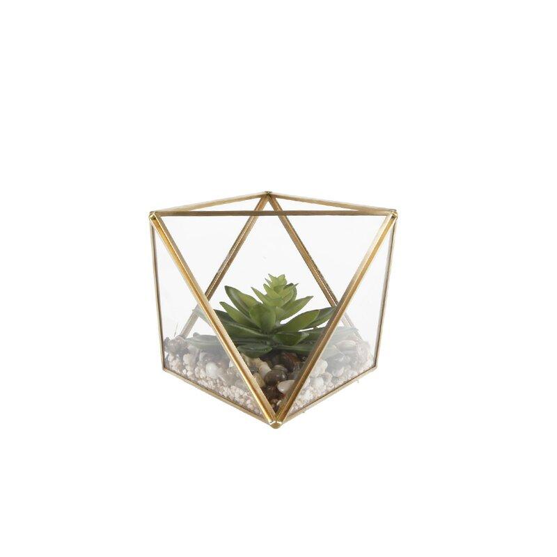 Desktop Succulent Plant In Glass Terrarium Reviews Allmodern