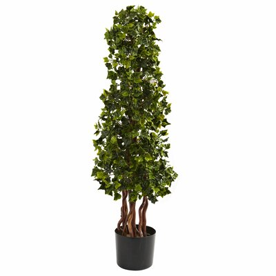 Alcott Hill English Ivy Spiral Tree in Pot