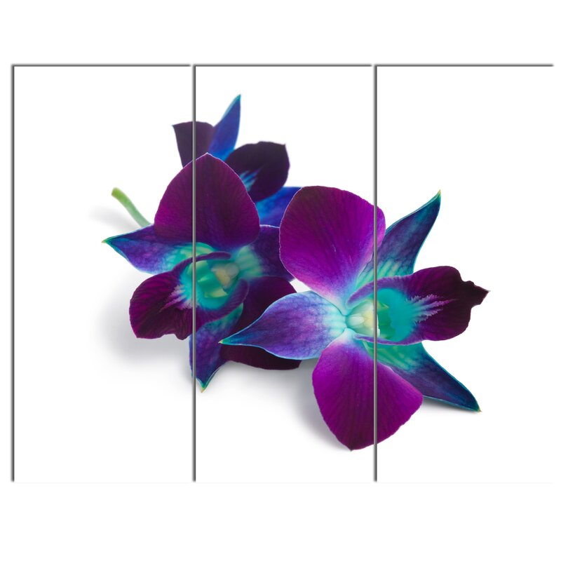 Designart Deep Purple Orchid Flowers On White 3 Piece Photographic Print On Wrapped Canvas Set Wayfair
