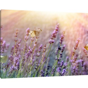 Butterfly On Lavender Flowers Wall Art On Canvas