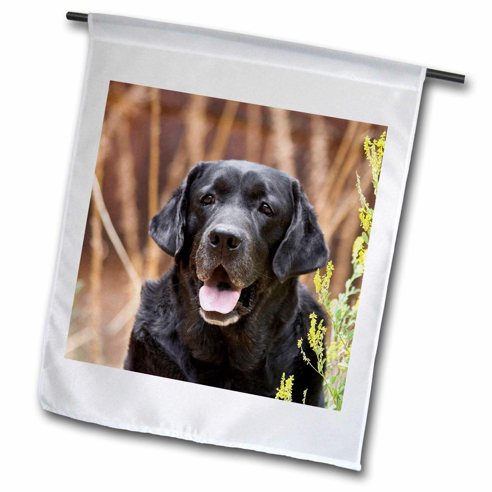 Red Barrel Studio Portrait Of A Labrador Retriever Dog Polyester 18 X 12 In Garden Flag Wayfair