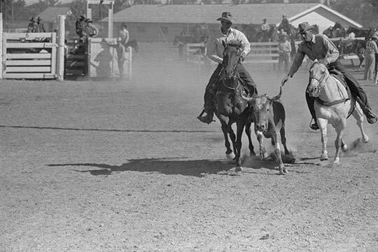 Buyenlarge Bulldogging By Arthur Rothstein Unframed Photograph Print Wayfair