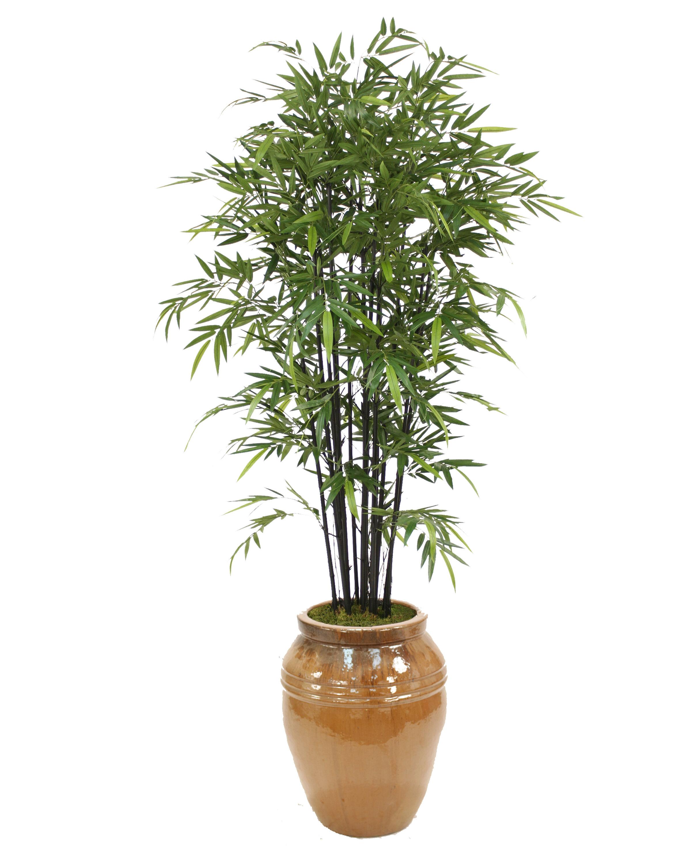 Distinctive Designs Bamboo Tree In Pot Wayfair