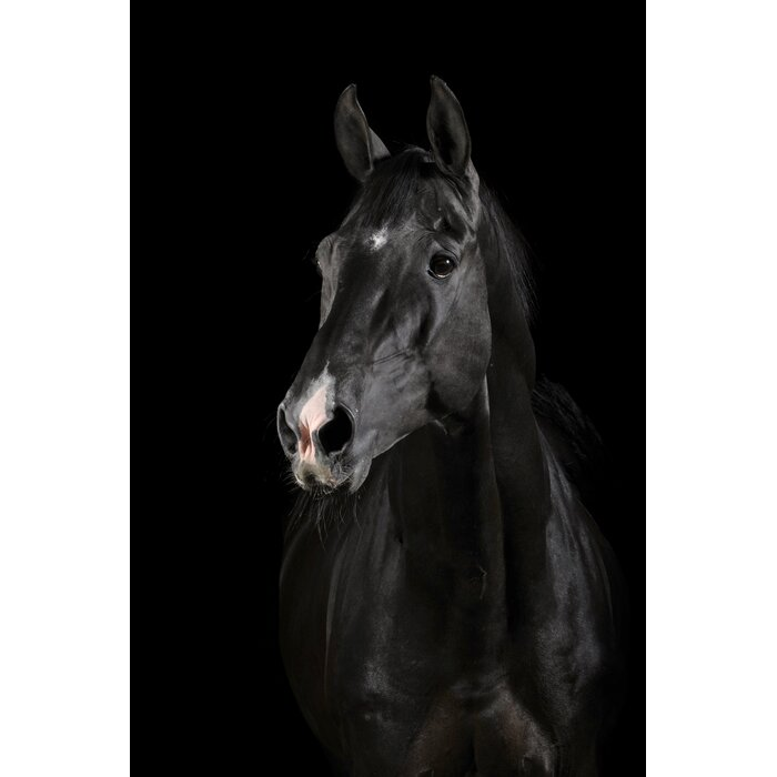 Serge De Troyer Collection \'Majestic Black Horse\' Framed ...