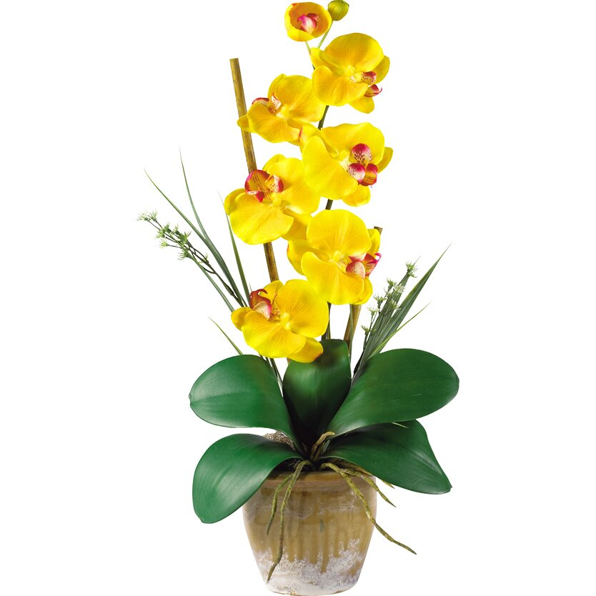Optical Catalyst Phalaenopsis Orchid Seven Vertical Yellow S Pots And Flower Size 9 Cm