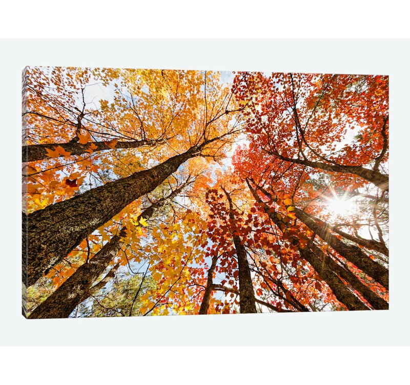 East Urban Home Low Angle Autumn View Of Maple Trees Upper Peninsula Michigan Usa Photographic Print On Canvas Wayfair,Personal Space Meme