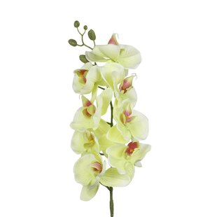 Green Orchid Faux Flowers You Ll Love In 2021 Wayfair