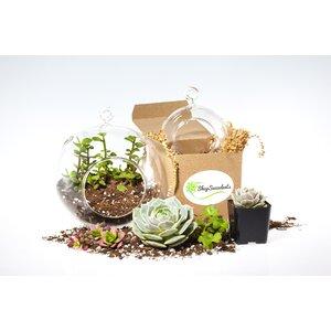 7 Piece Modern Succulent Terraium Globe Set