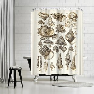 Adams Ale Shells Single Shower Curtain by East Urban Home