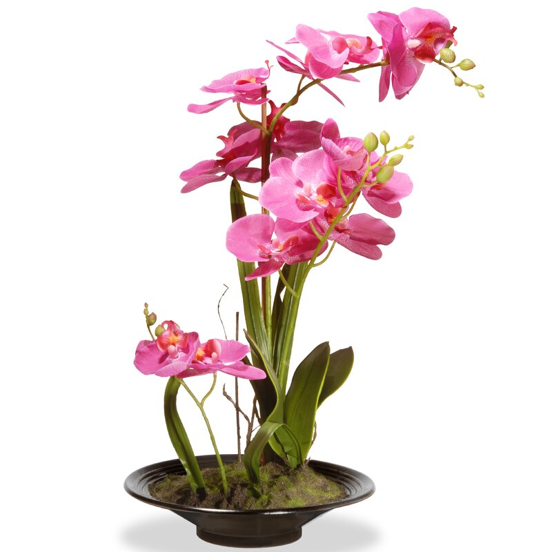 Spring Orchid Floral Arrangement in Planter