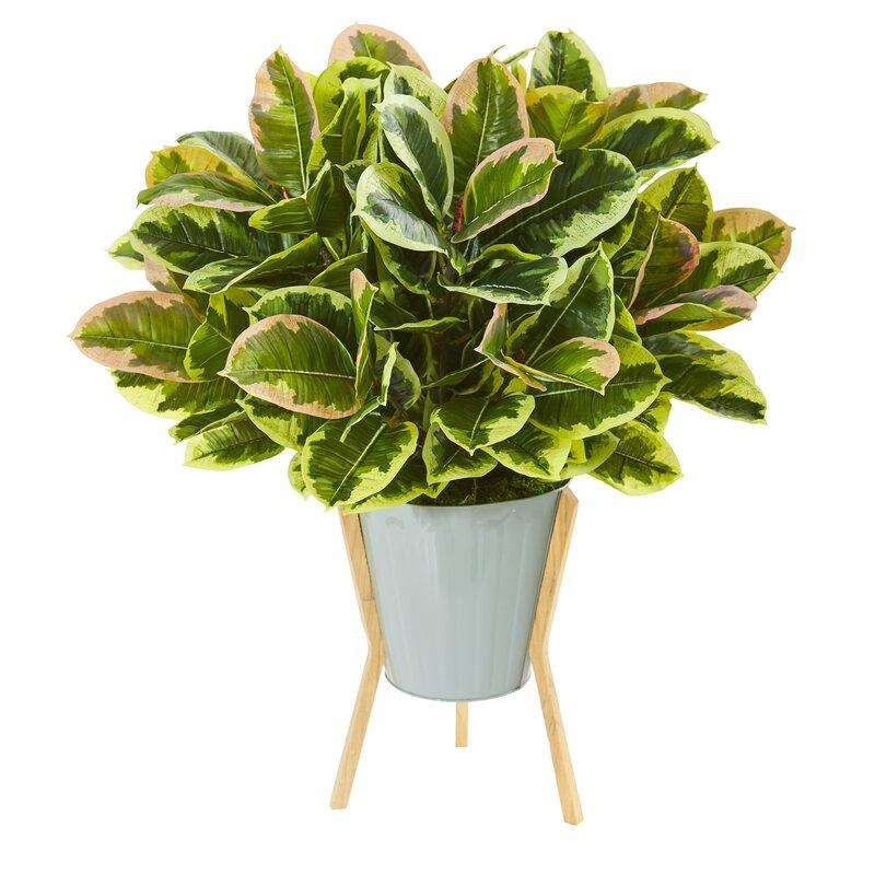 Ebern Designs 14 Artificial Rubber Leaf Plant In Planter Wayfair