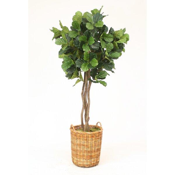 Distinctive Designs Fiddle Leaf Fig Tree In Basket | Wayfair