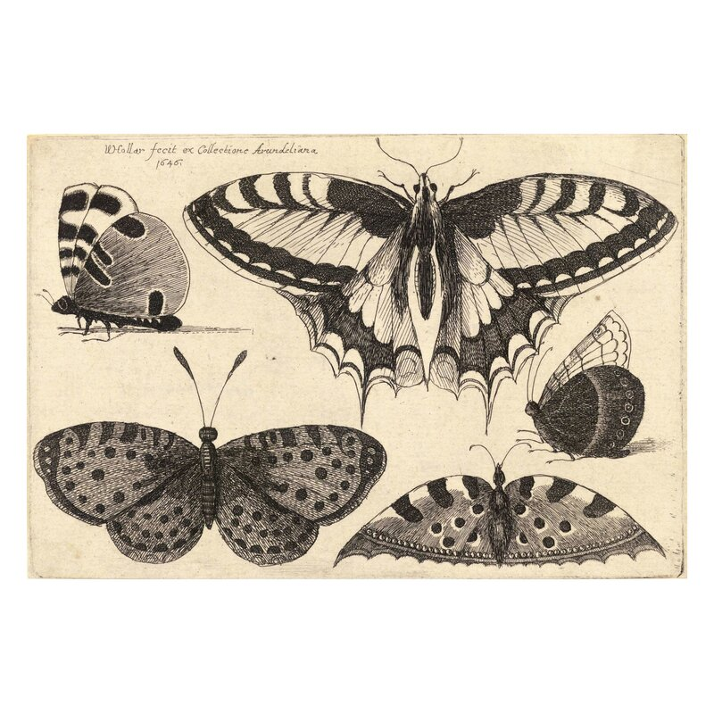Vintage Butterfly 'III' by Julia Kearney Graphic Art Print