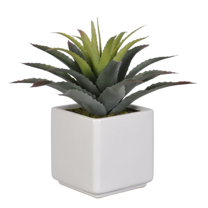 Zipcode Design  Artificial Star Succulent Desk Top Plant in Pot Base Color: White