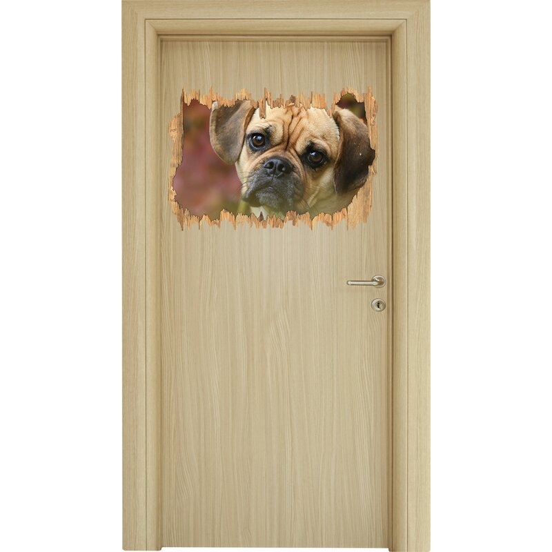 Quizzical Looking Pug Puppy Wall Sticker