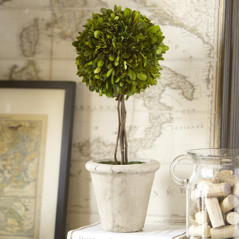 single ball preserved boxwood topiary