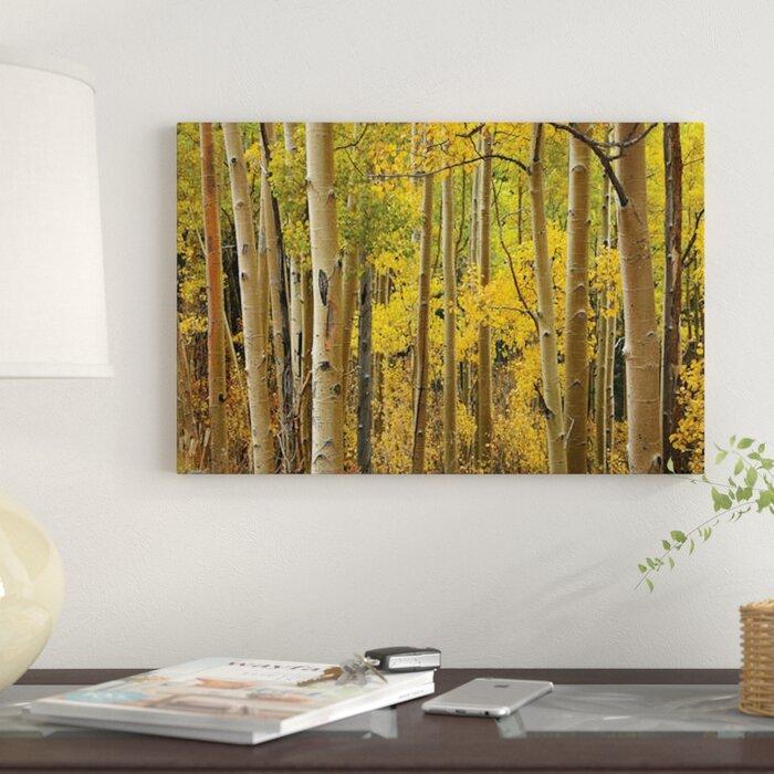 Canvas Santa Fe >> Quaking Aspen Trees In Autumn Santa Fe National Forest Near Santa Fe New Mexico I Photographic Print On Canvas