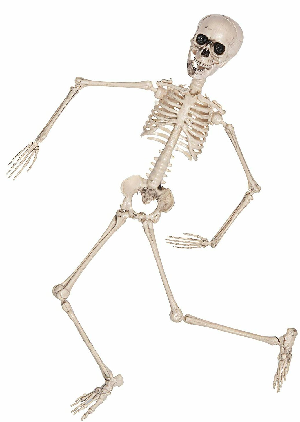 The Holiday Aisle® Posable and Full Body Halloween Skeleton with Movable  and Posable Joints Decorative Accent & Reviews | Wayfair