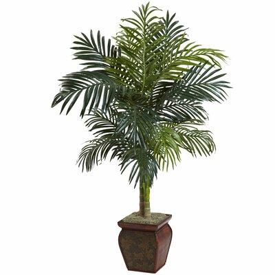 Indoor Plants in Decorative Vase You\'ll Love | Wayfair