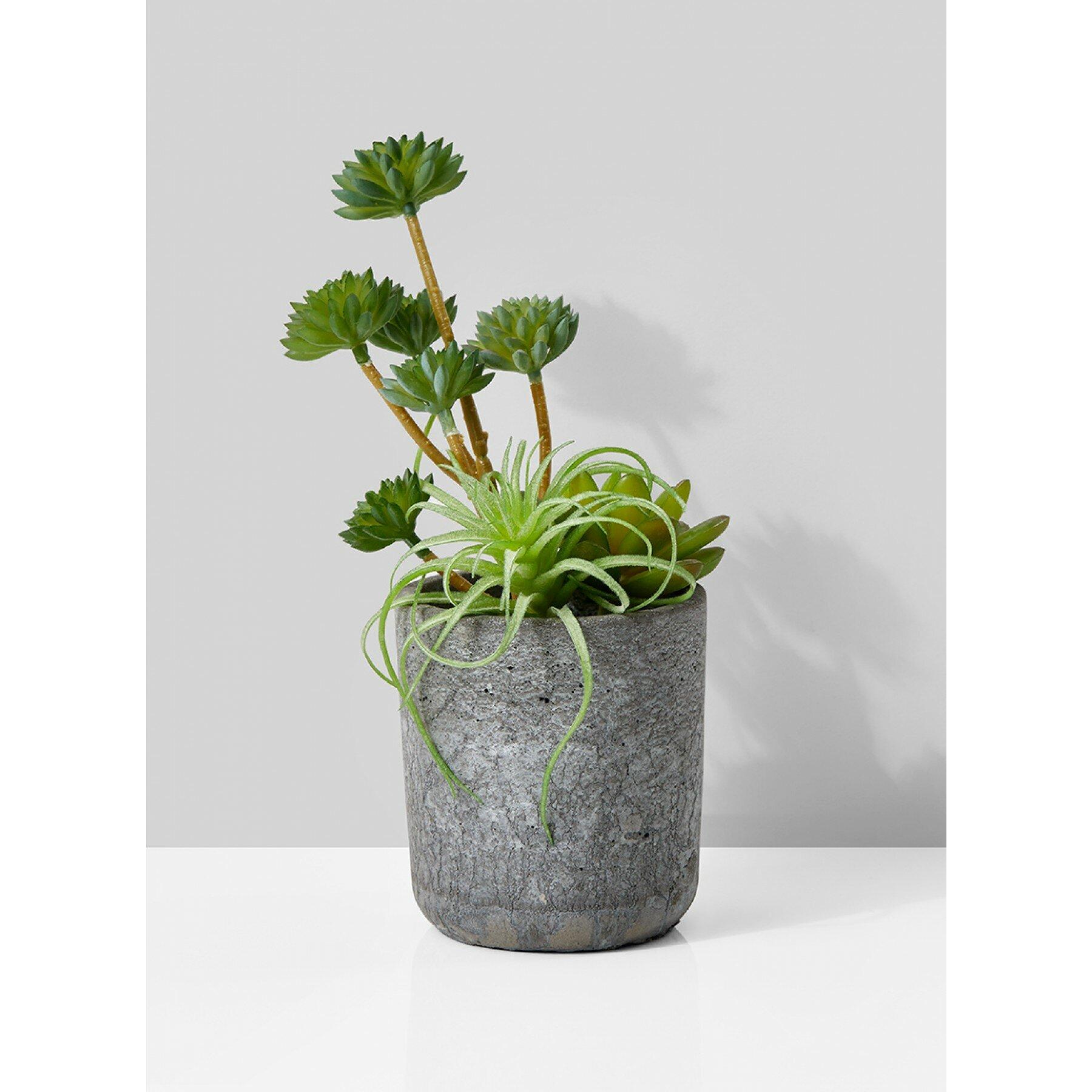Wrought Studio Artificial Mixed Desktop Succulent Plant In Pot Reviews Wayfair