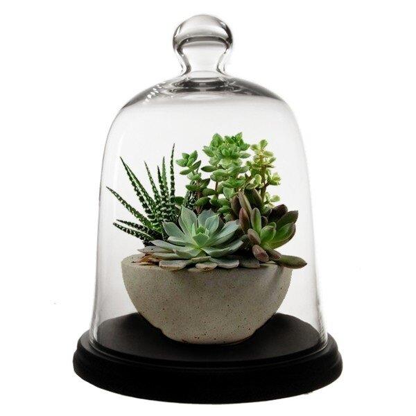 Charlton Home Rubi Dome Bell Jar Glass Terrarium Wayfair